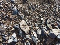 Сланец каменистый